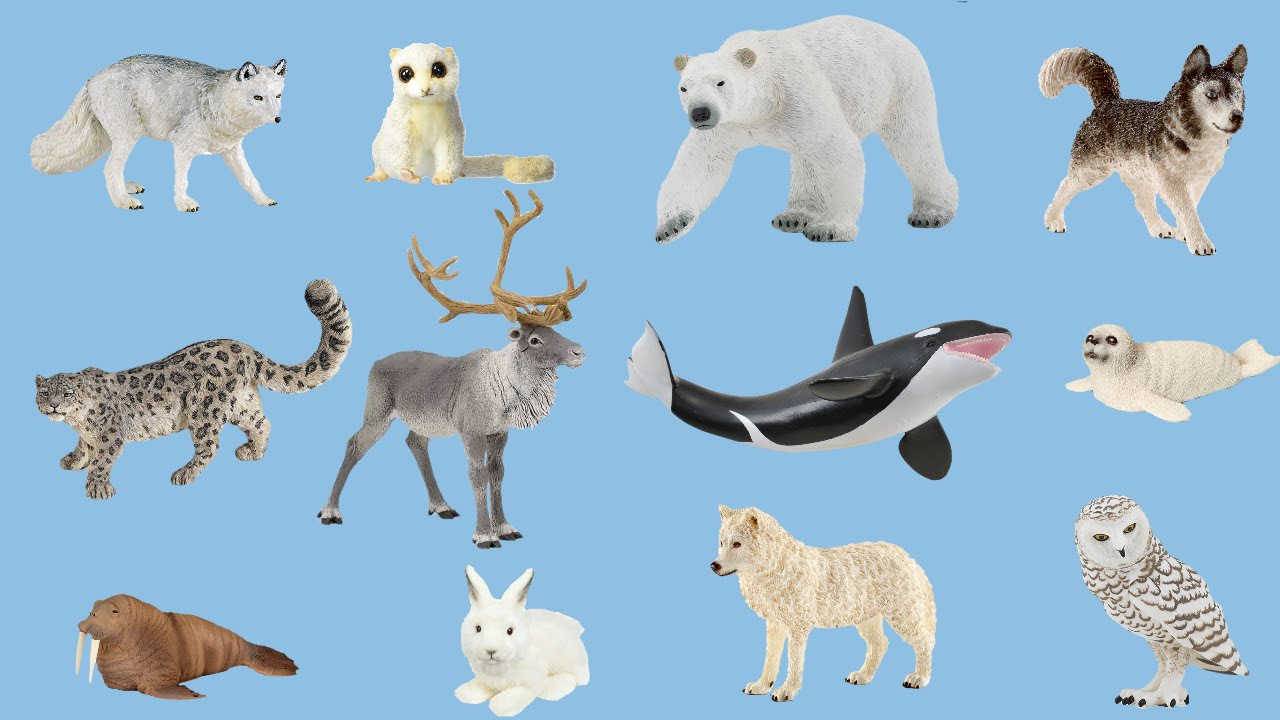 arctic animal animals camp